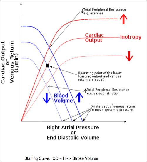 effect of exercise on cardia output